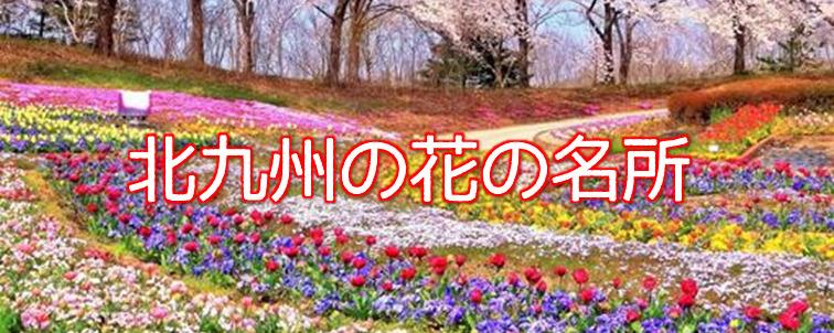 北九州の花の名所
